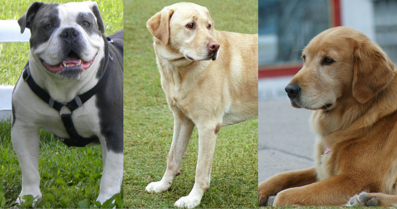 Dog Breeds: What Are the 50 Most Popular Dogs in America?