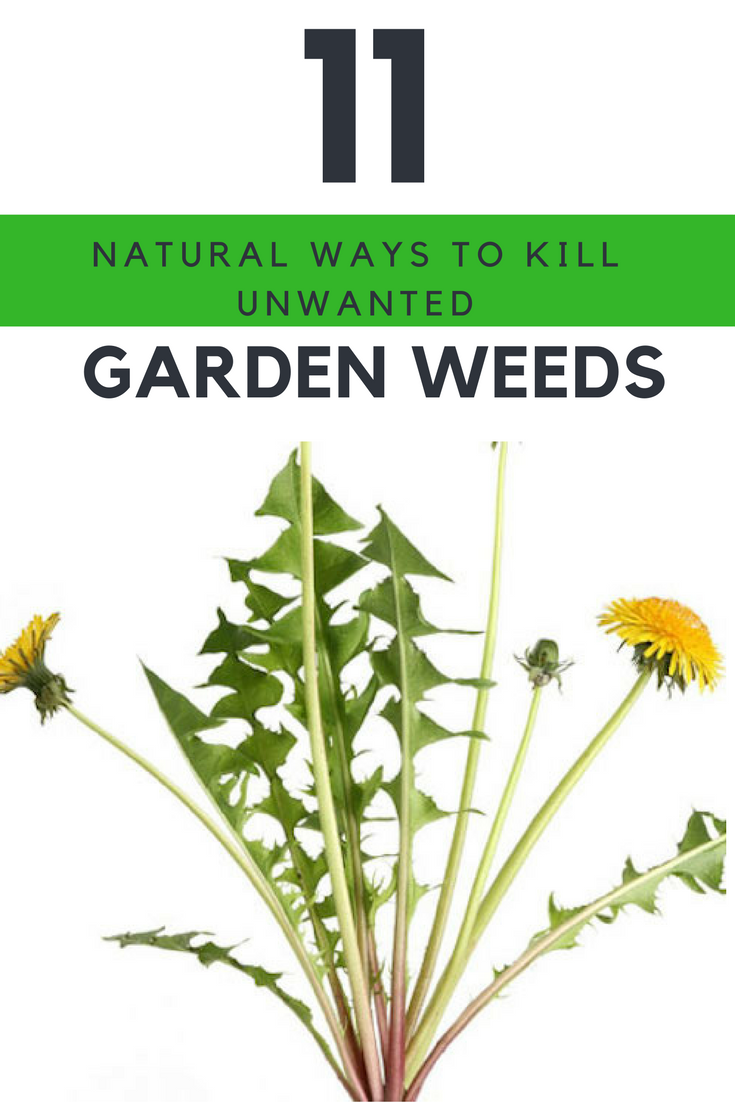 11 natural ways to kill your unwanted garden weeds immediately ideahackscom - Garden Weeds