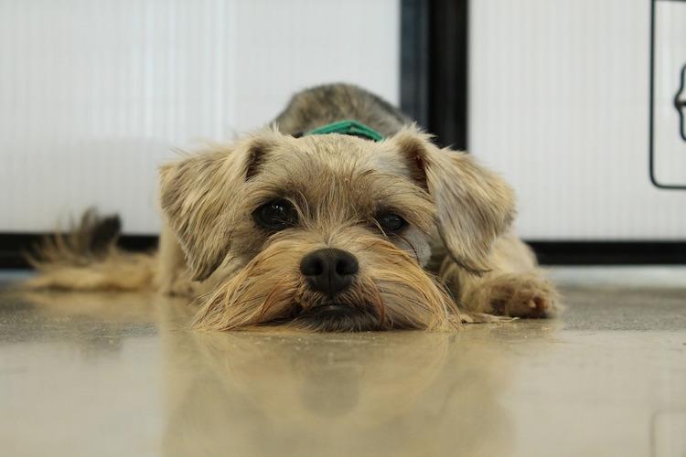 <thrive_headline click tho-post-1548 tho-test-48>20 Amazing Reasons Why You Should Consider Adopting A Pet</thrive_headline>