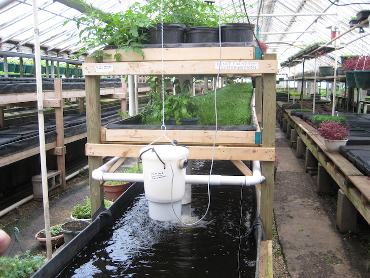 10 Reasons Why You Need to Build Your Own Aquaponics System at Home