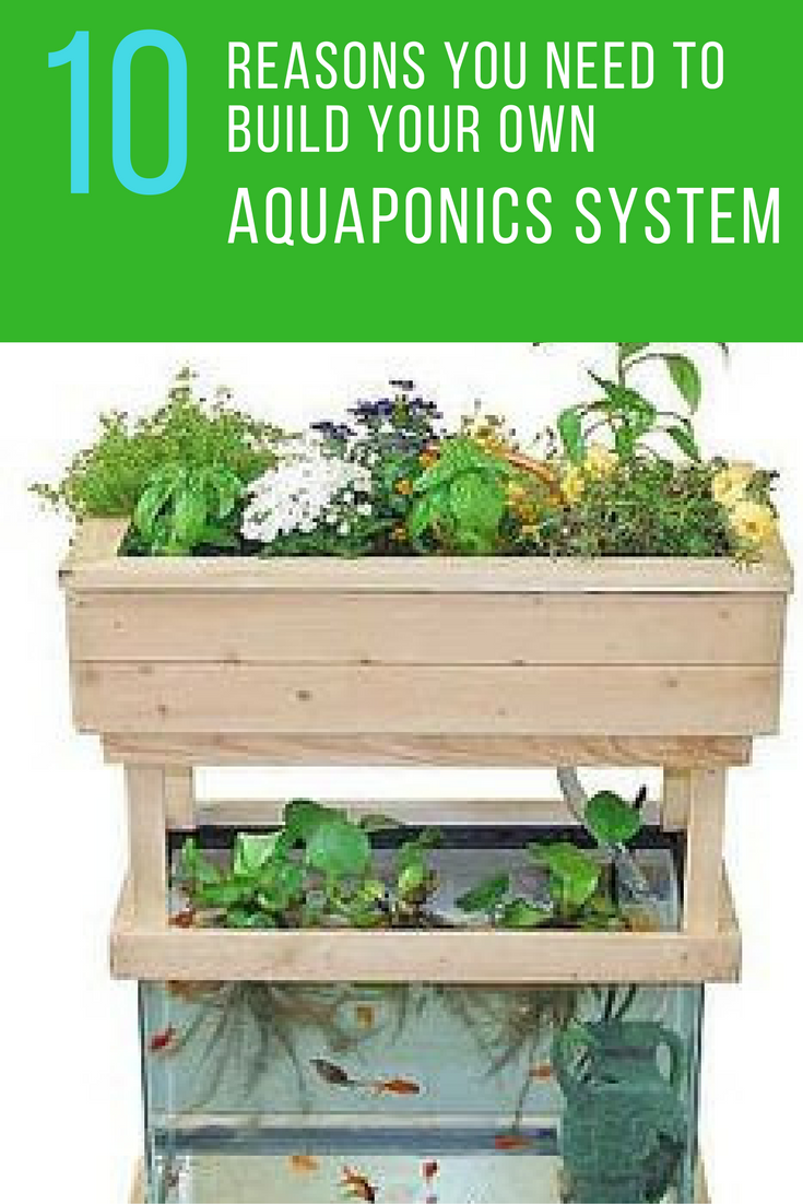 10 Reasons Why You Need to Build Your Own Aquaponics System at Home. | Ideahacks.com