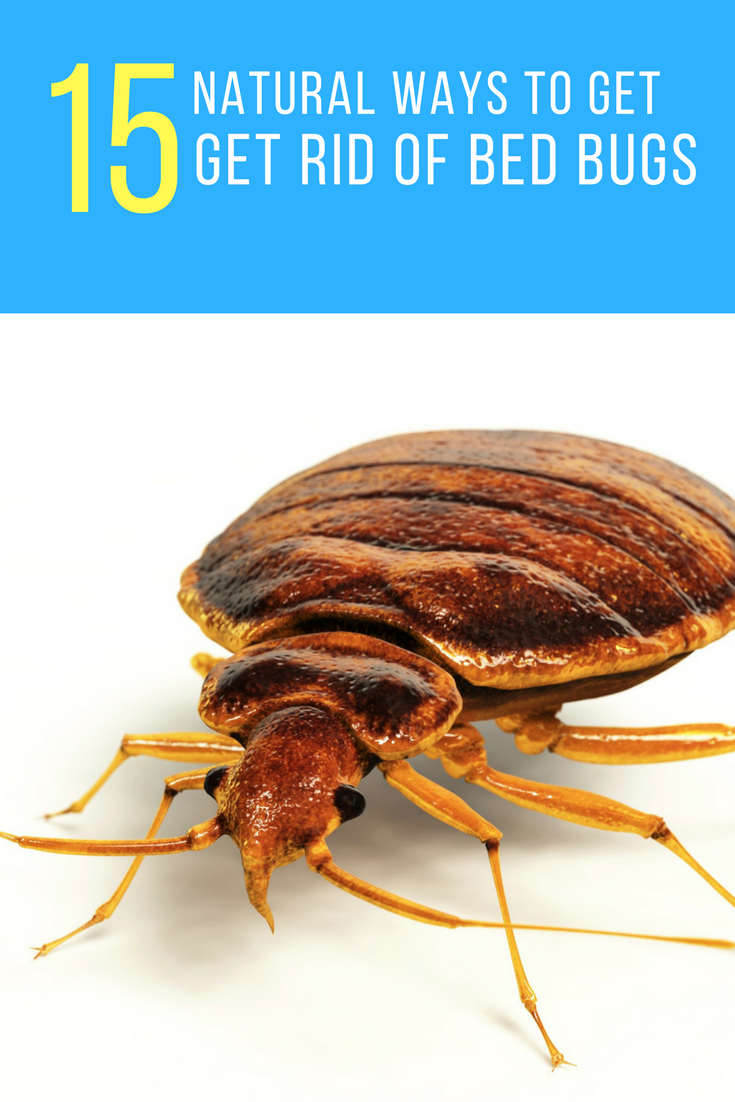 home get yourself bugs before learn rid of you to bed can remedies foundation how howtogetridofbedbugs
