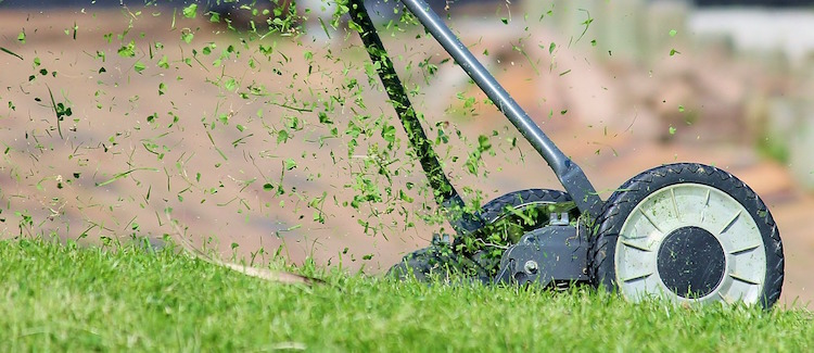 15 Lawn Care Tips to Have The Best Organic Lawn Ever
