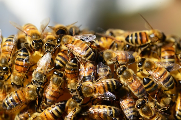 <thrive_headline click tho-post-1396 tho-test-37>11 Reasons Why You Need to Help Us Save The Bees</thrive_headline>