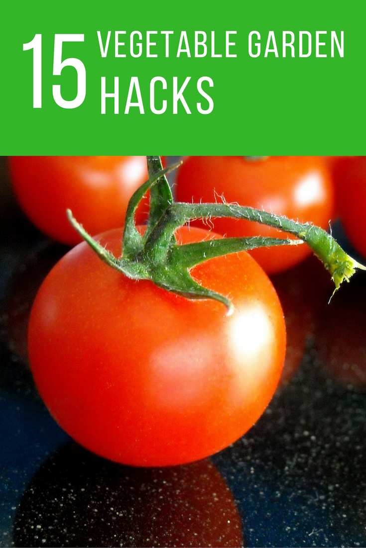 15 Clever Hacks For The Most Successful Vegetable Garden Ever. | Ideahacks.com