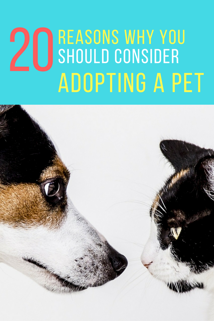 20 Amazing Reasons Why You Should Consider Adopting A Pet.   Ideahacks.com
