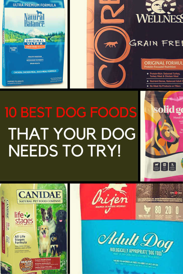 10 Best Dog Foods That Your Dog Needs to Try. | Ideahacks.com