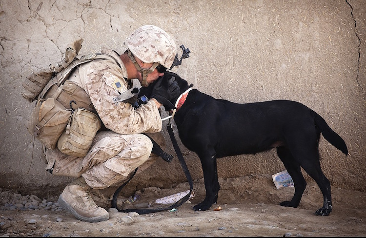 Dog with Soldier