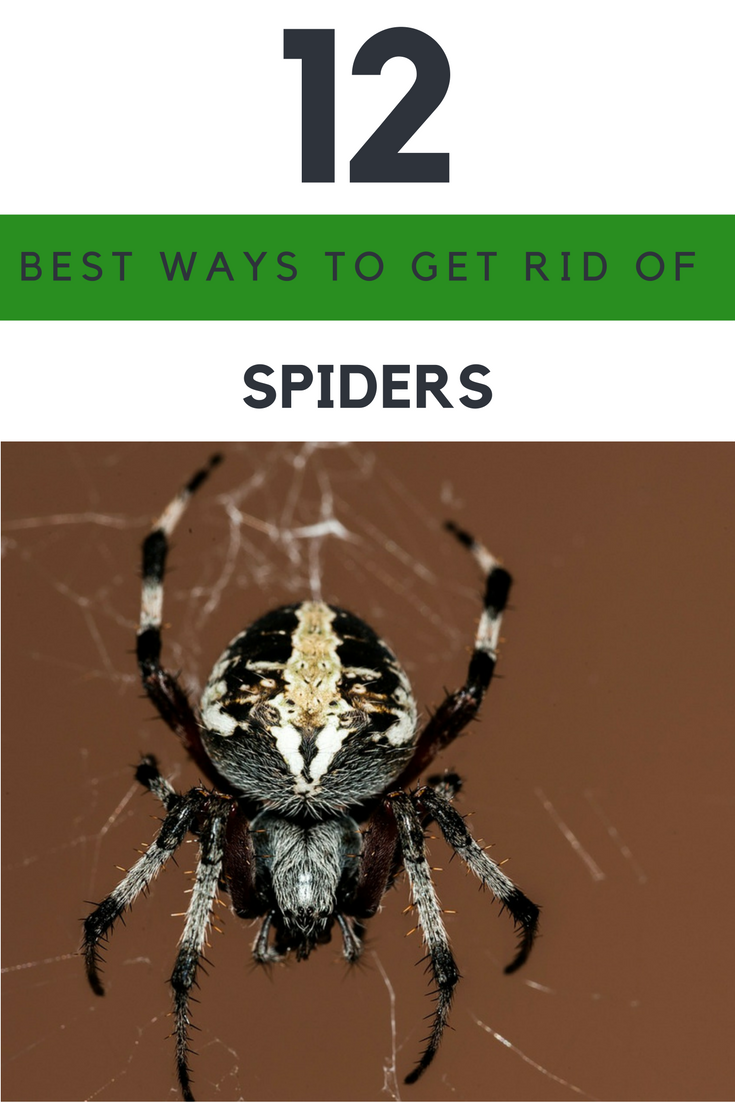 12 Best Ways to Get Rid of Spiders Naturally in Your House. | Ideahacks.com