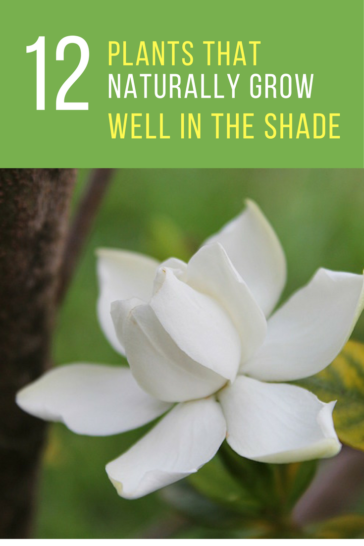 12 Plants That Grow Well In The Shade. | Ideahacks.com