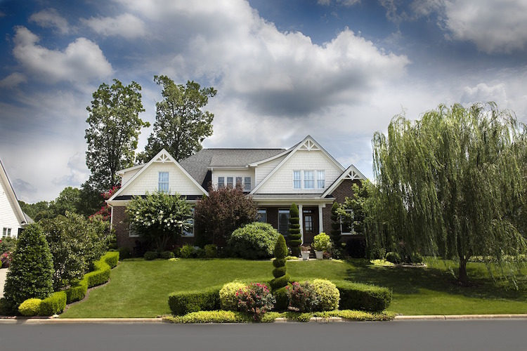 Trees Increase Property Value