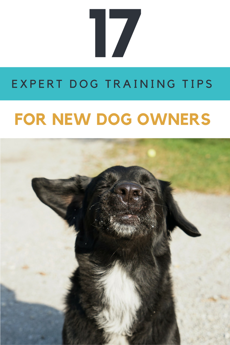 17 Expert Dog Training Tips For New Dog Owners.   Ideahacks.com