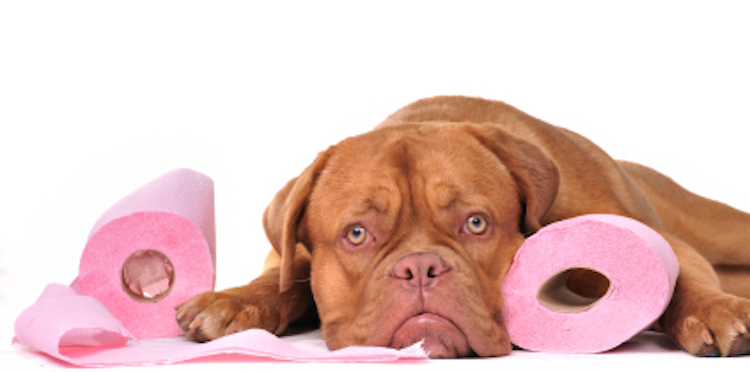 10 Dog Expert Tips on Housebreaking a Puppy