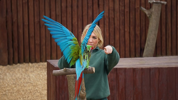 Training Your Parrot