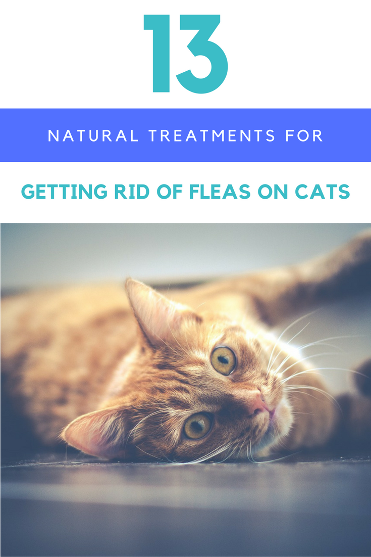 how to get rid of fleas on cats naturally