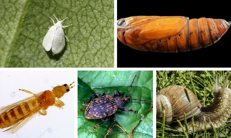 How to Control These 12 Common Destructive Garden Pests Naturally