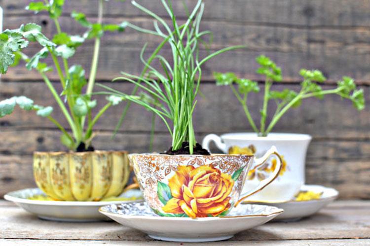 Teacup Herb Planters