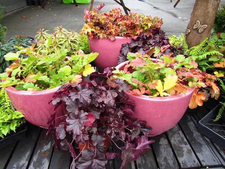 Winter Container Gardening