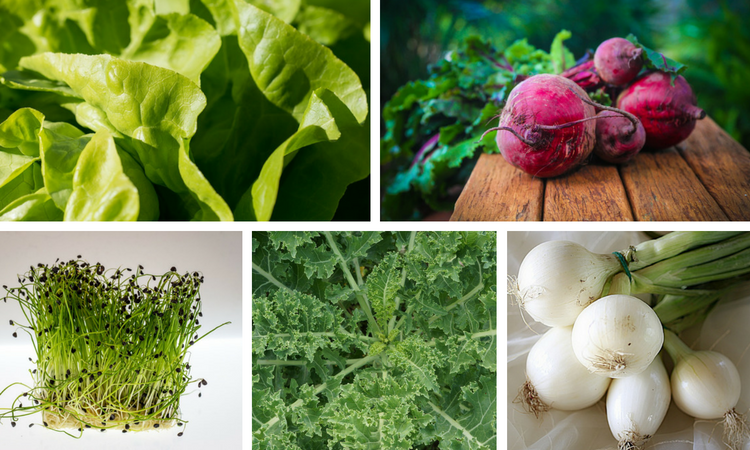 <thrive_headline click tho-post-3416 tho-test-224>10 Profoundly Delicious Microgreens You Can Grow Indoors</thrive_headline>