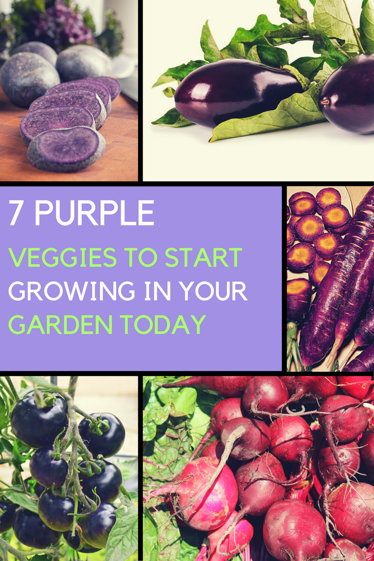 7 Purple Veggies To Start Growing In Your Garden. | Ideahacks.com