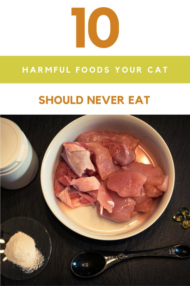 10 Harmful Foods Your Cat Should Never Eat.   Ideahacks.com