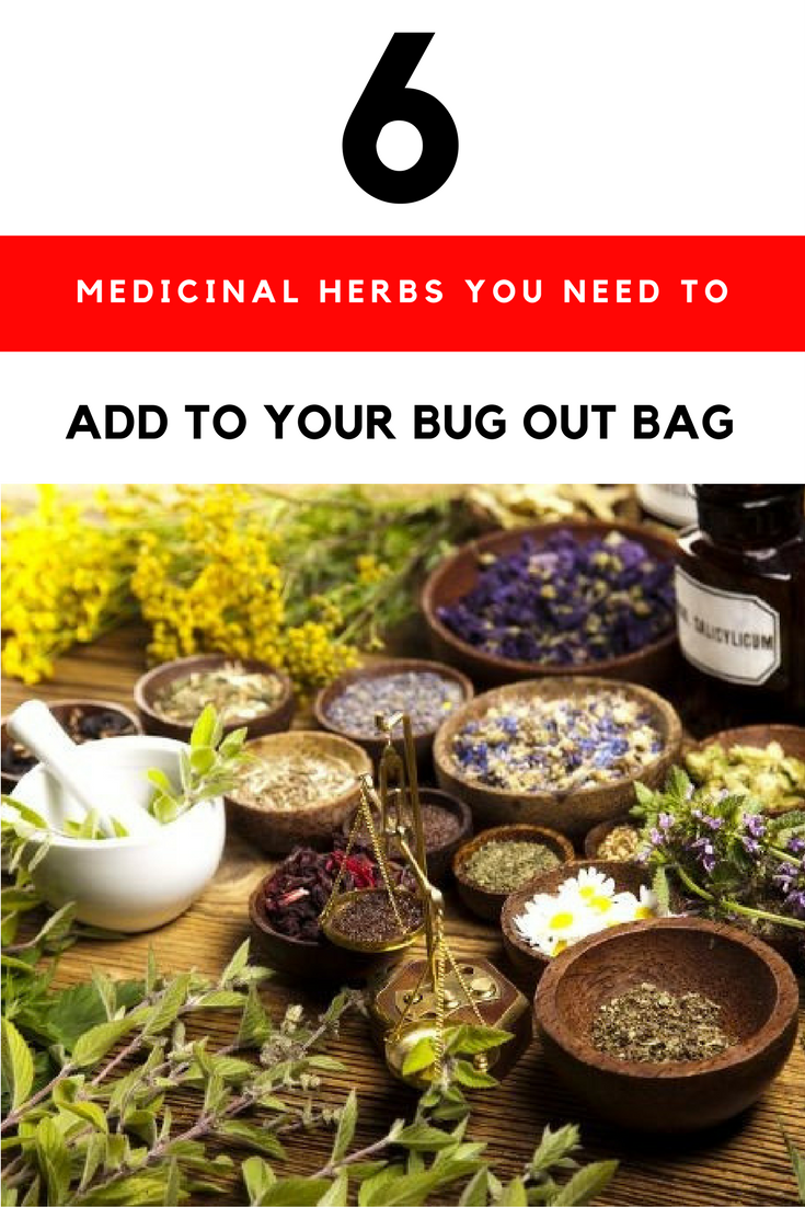 Top 6 Ultimate Medicinal Herbs You Need to Add To Your Bug Out Bag. | Ideahacks.com