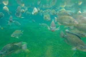 10 Things Every Homesteader Needs to Know About Fishing Farming