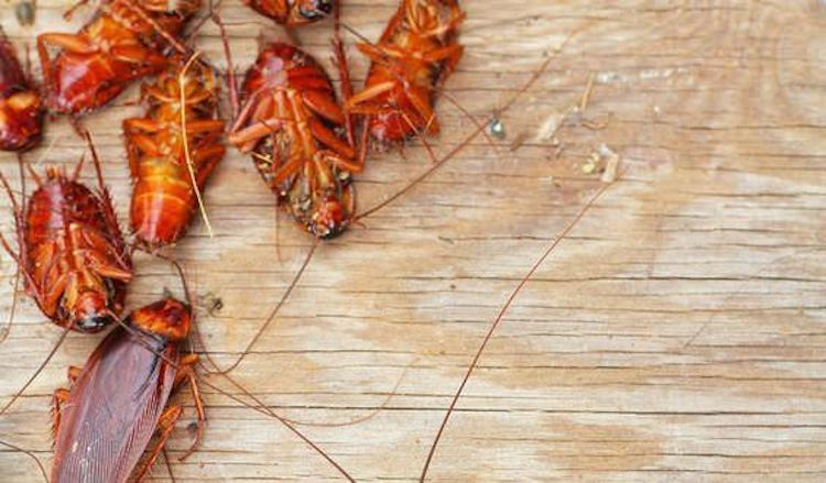 How To Get Rid Of Roaches In Your Home Naturally (12 Unique Ways)
