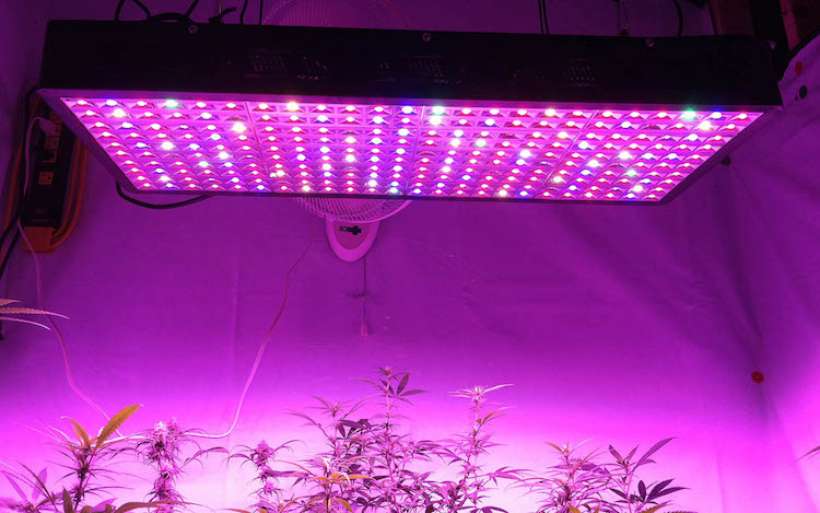 heat weed led grow lighting yields light growing breakdown lights easy blackstar cost kieflicious cannabis