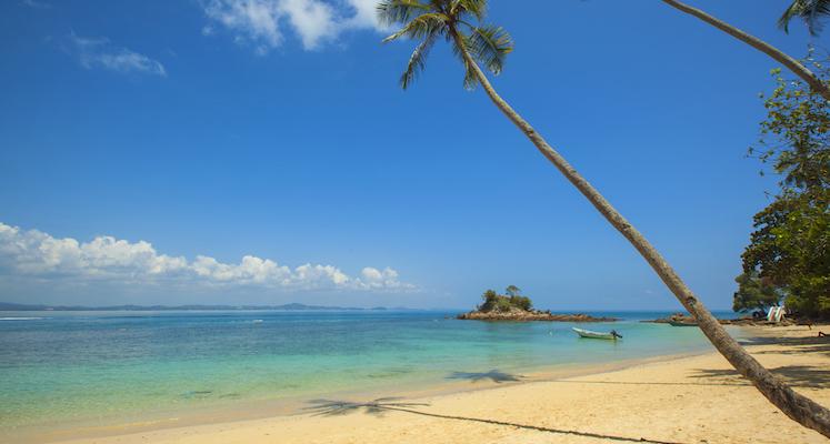 Green Coconut Palm Beside Seashore