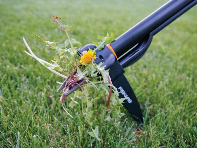 Maintaining a Weed Free Lawn