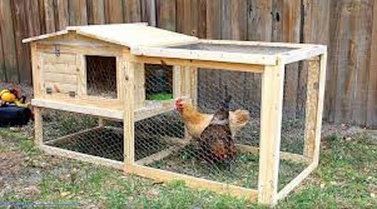 DIY Small Backyard Chicken Coop