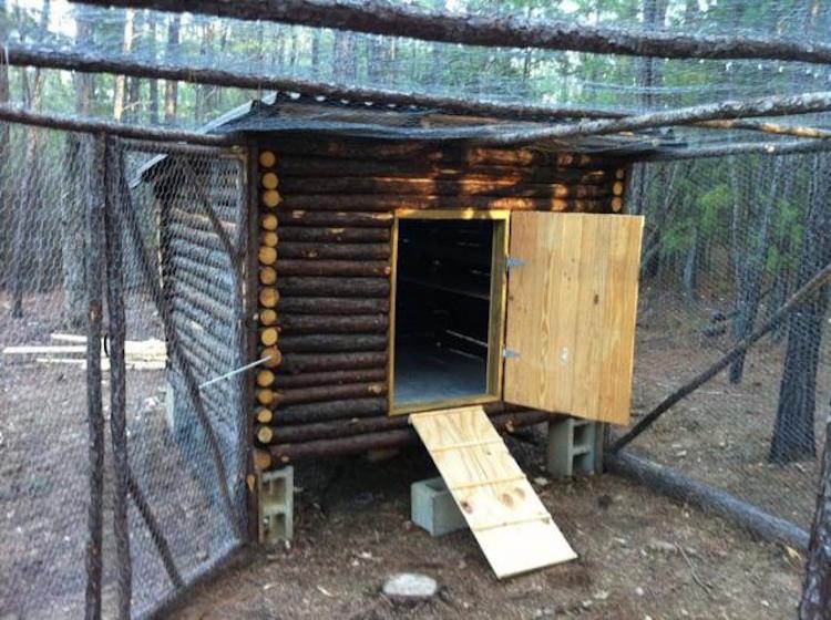 Fox's Log Cabin Chicken Coop