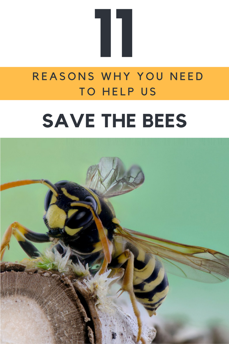 11 Reasons Why You Need to Help Us Save The Bees
