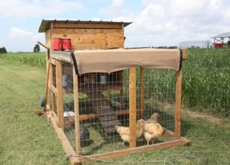 The Kerr Center Chicken Tractor