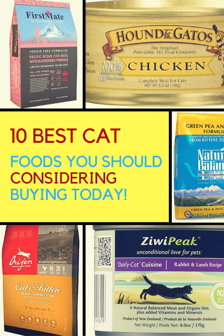 10 Best Cat Foods That You Should Buy Today. | Ideahacks.com