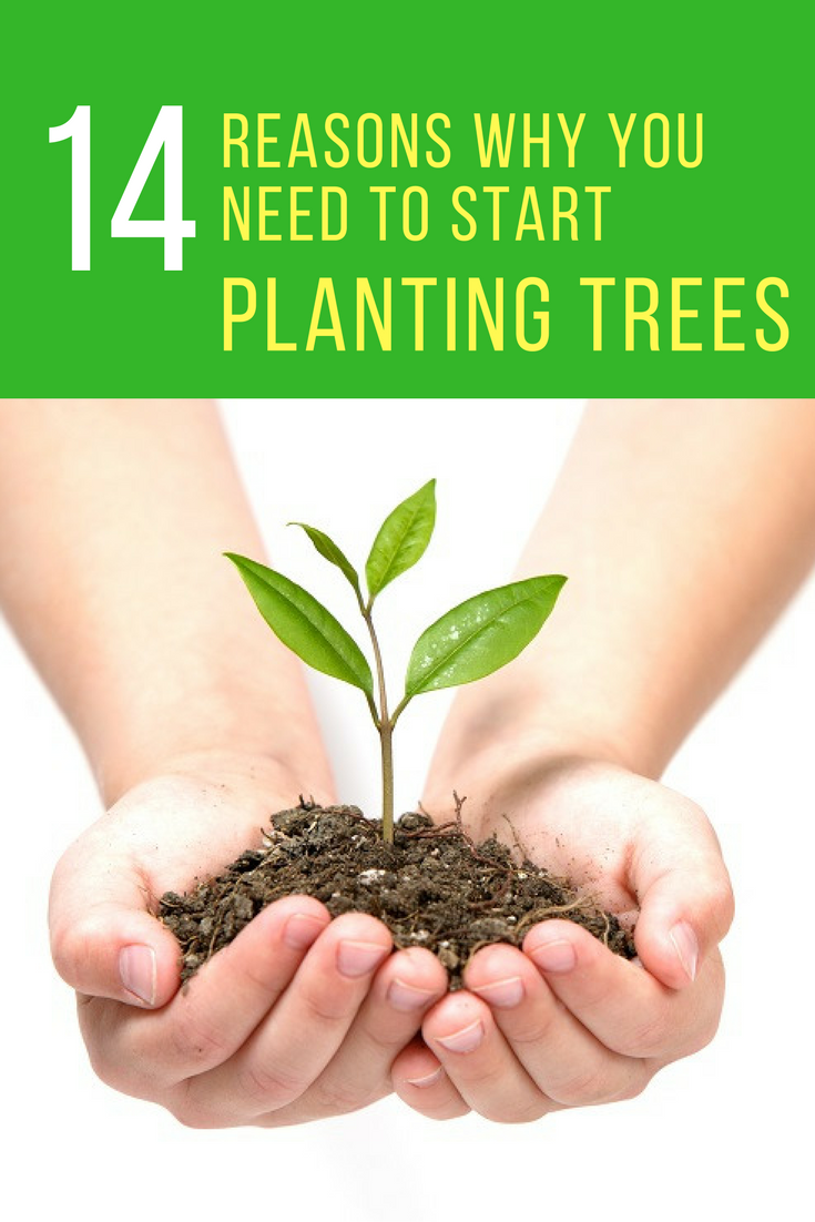 14 Reasons Why You Need to Start Planting Trees Today. | Ideahacks.com