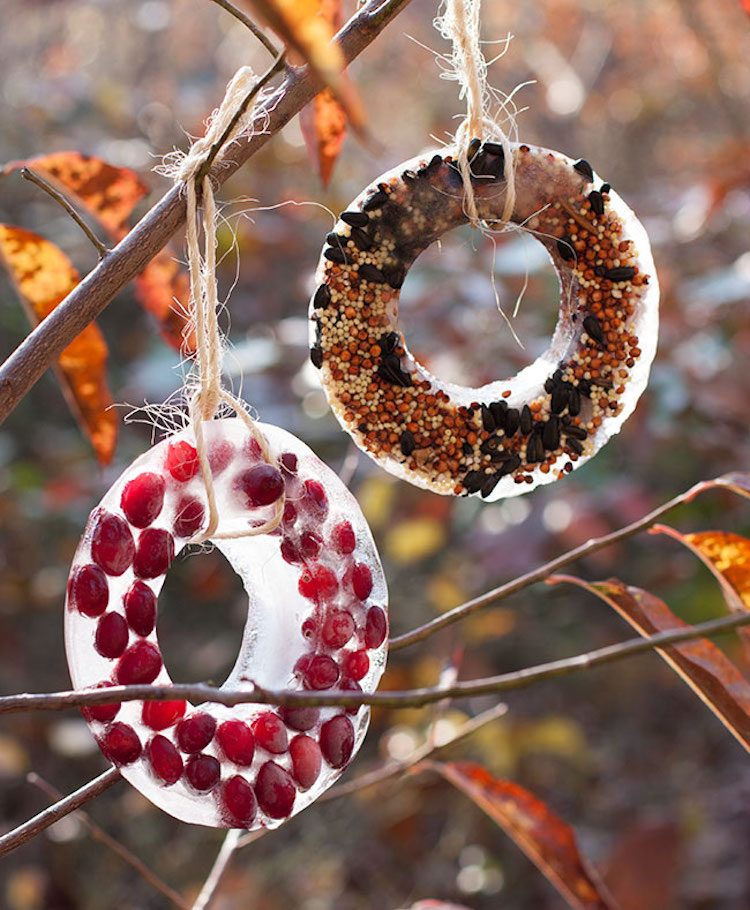 Diy bird feeders 24 ways to make your own birder feeder bird seed ice ornaments solutioingenieria Image collections