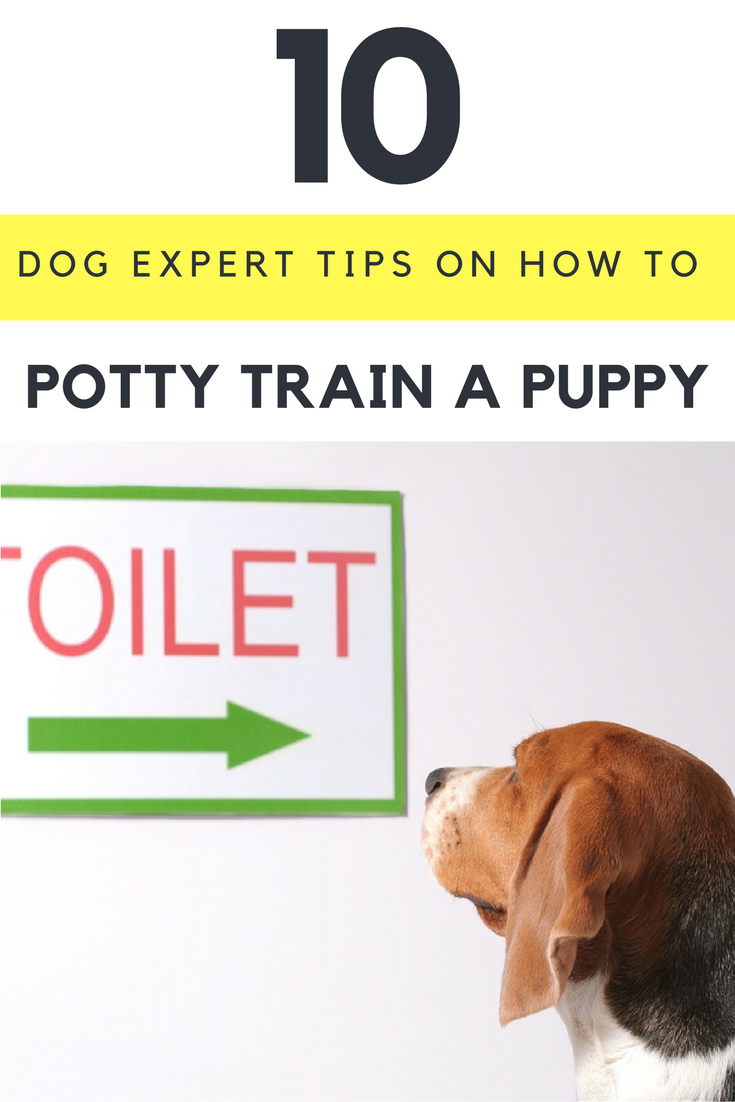 10 Dog Expert Tips on How to Potty Train a Puppy
