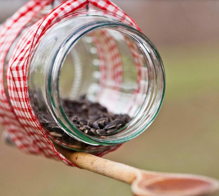 DIY Bird Feeders: 24 Ways to Make Your Own Birder Feeder