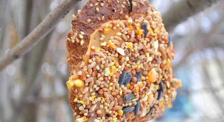 Stale Bread Bird Feeder