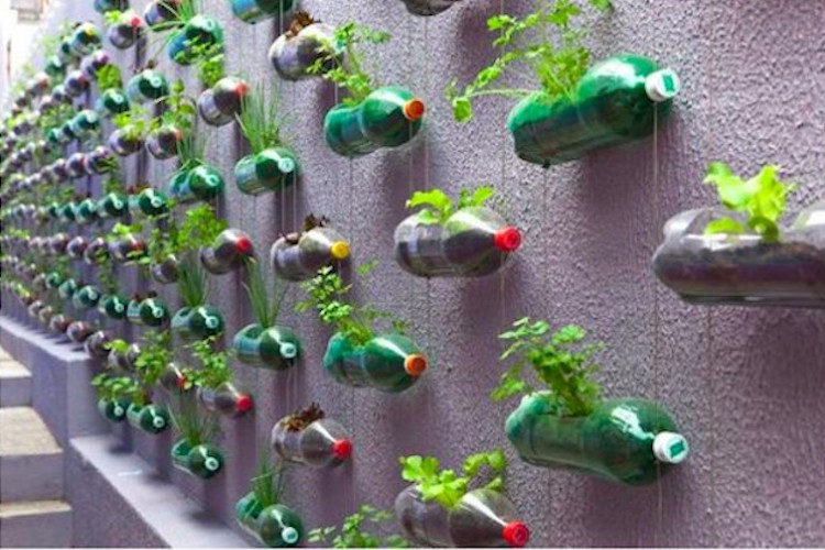 Soda bottles as vertical garden planters