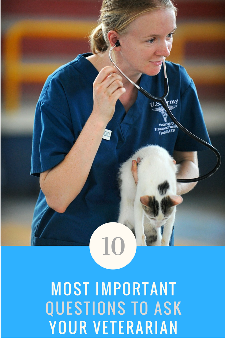 10 Most Important Questions to Ask Your Vet. | Ideahacks.com