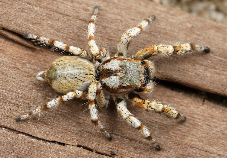 The World's 14 Most Dangerous & Venomous Spiders You Should Avoid At All Costs
