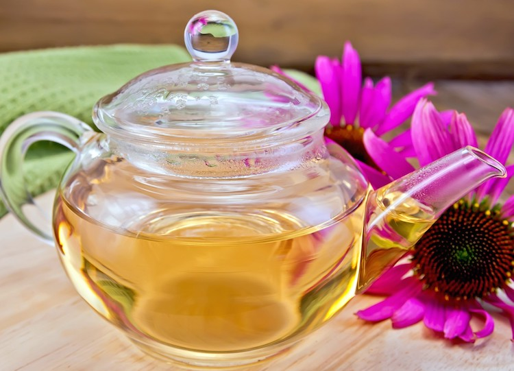 11 Amazing Echinacea Tea Benefits That You Never Knew About