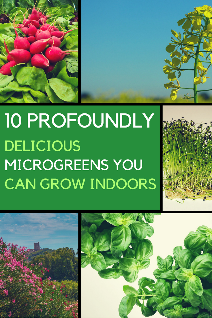 10 Profoundly Delicious Microgreens You Can Grow Indoors