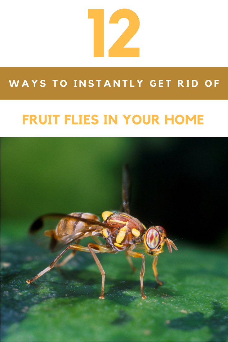 12 Ways to Instantly Get Rid of Fruit Flies In Your Home. | Ideahacks.com