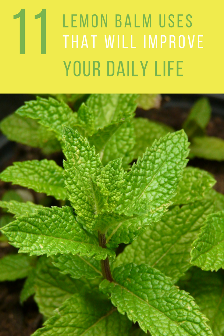 11 Creative Things To Do With Lemon Balm. | Ideahacks.com