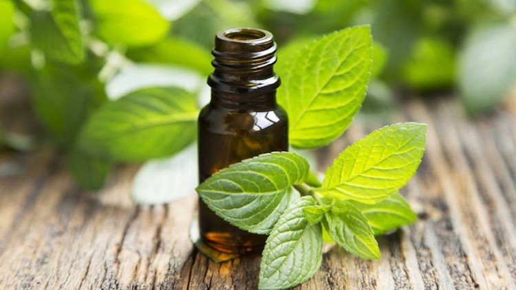 The Miracle of Peppermint Oil: 20 Practical Uses For Beauty & Health