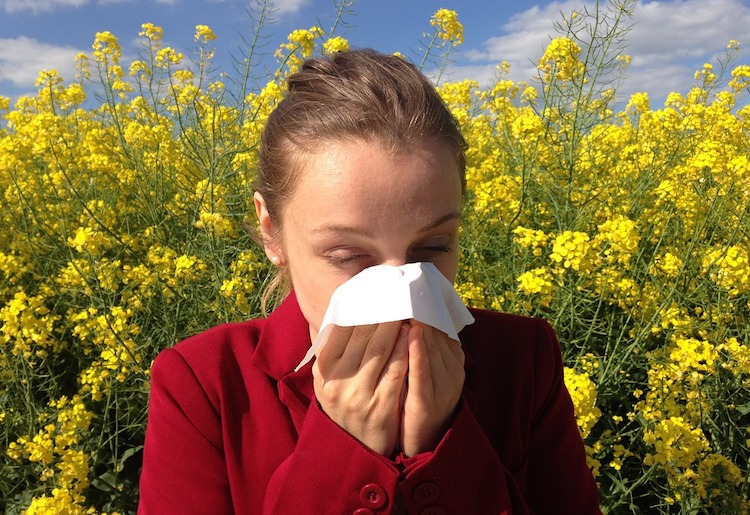 10 Most Effective Natural Remedies for Allergy Relief